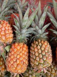 ananas-comosus-victoria-p1190421.jpg