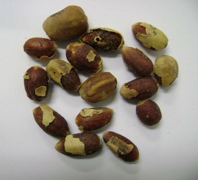 Balanites aegyptiaca fruit