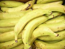 banane-plantain-01.jpg