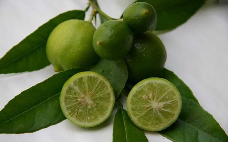 Citrus aurantifolia mexicaine