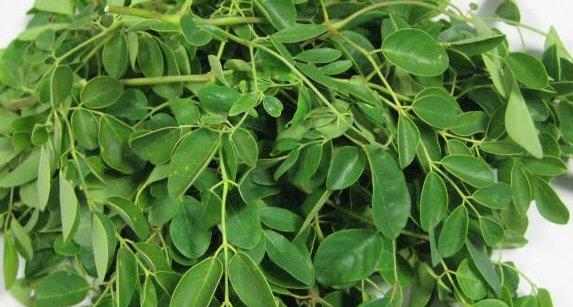 Moringa feuilles